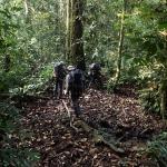 wyprawa do afryki, dżungla i rafting