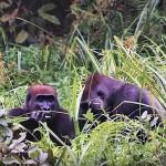12-afryka-wyprawa-ekspedycja-gabon-dzungla-rafting-goryle-slonie-tramping-dzikababa