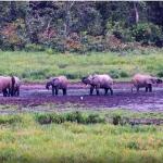 13-afryka-wyprawa-ekspedycja-gabon-dzungla-rafting-goryle-slonie-tramping-dzikababa