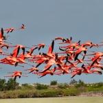 meksyk-gwatemala-belize-flamingi