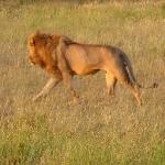 safari-serengeti-tanzania-zanzibar-dzikababa
