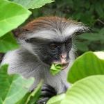 zanzibar-afryka-tramping-safari-dzikababa