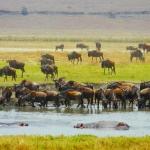 safari-afryka-zanzibar-dzikababa