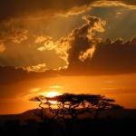 safari-serengeti-afryka-tramping-dzikababa
